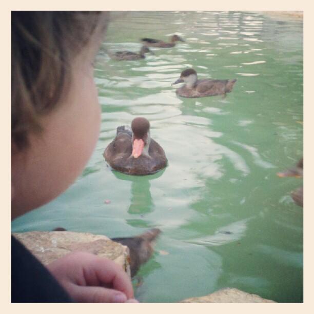 feeding ducks at SeaWorld San Antonio