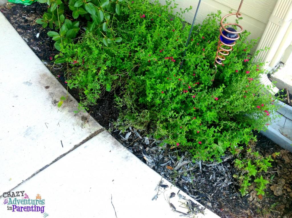 garden cut back