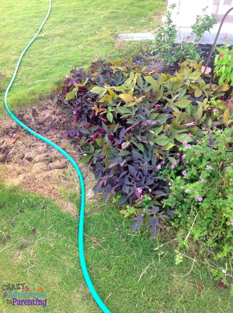 garden trimmed