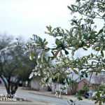 Our Version of FROZEN – San Antonio Ice Storm 2014
