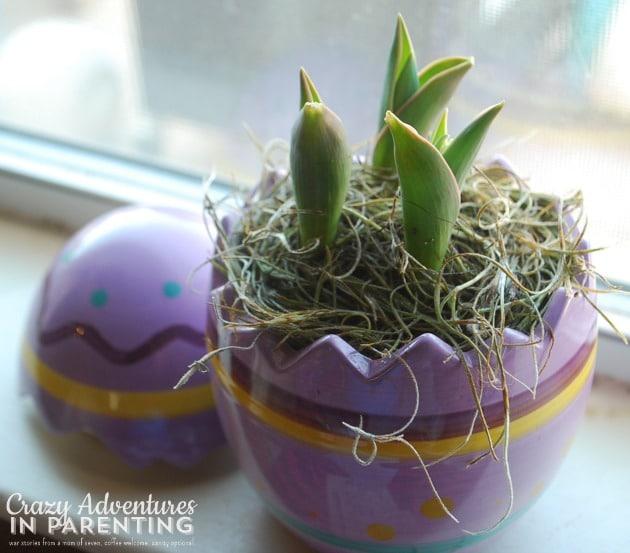 easter egg hunt growth