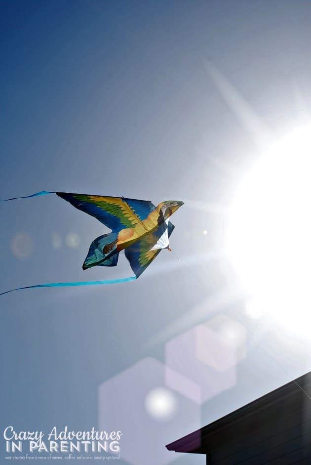 kite sun flare