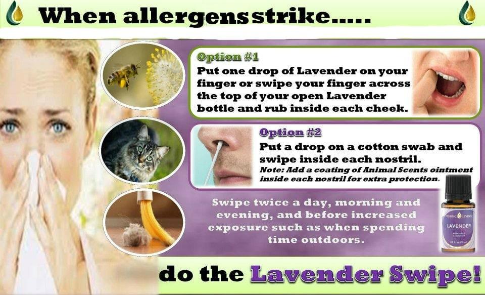 lavender allergens