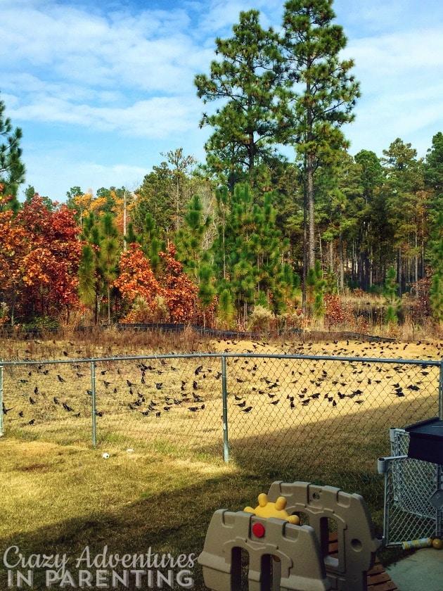 fall scene with birds
