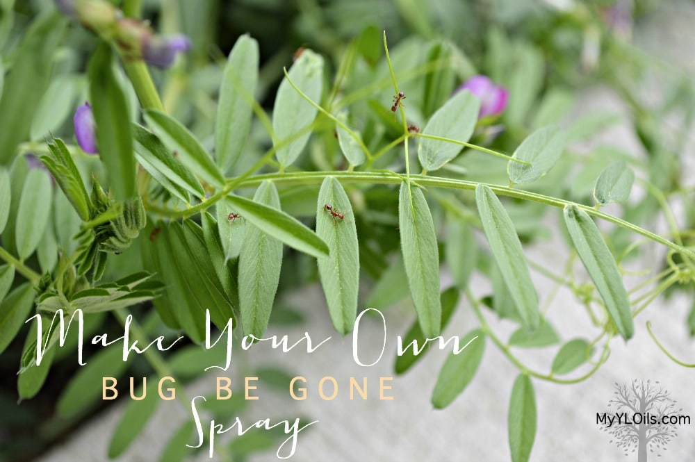 Make your own Bug Be Gone spray with Young Living essential oils - non-toxic bug spray