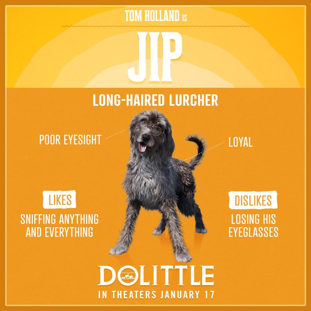 Dolittle Animal Trading Cards Jip
